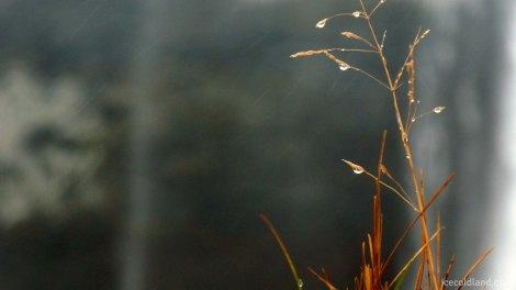 - rain was already splashing on the lens filter -