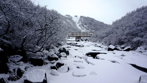 - am i in a japanese wintertime zen garden? feels like it -
